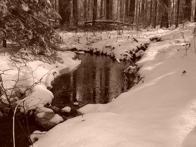 snow 120905 002.jpg