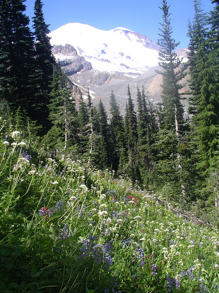 First view of the mountain and fields of wildflowers.