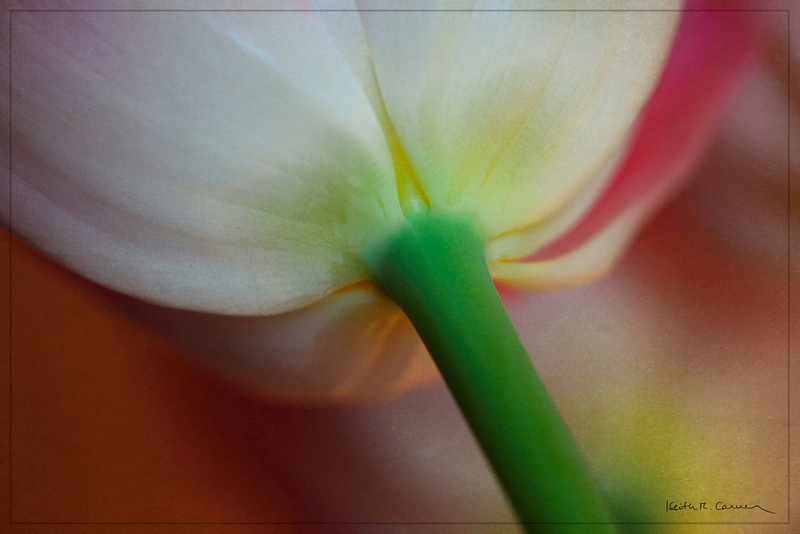 Tulip receptacle and stem