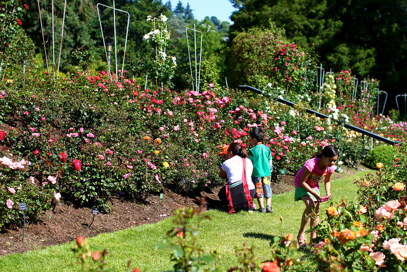 Portland International Rose Test Garden  2222.jpg