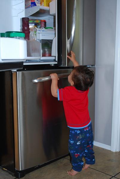 Baby Arthur Explores the Kitchen