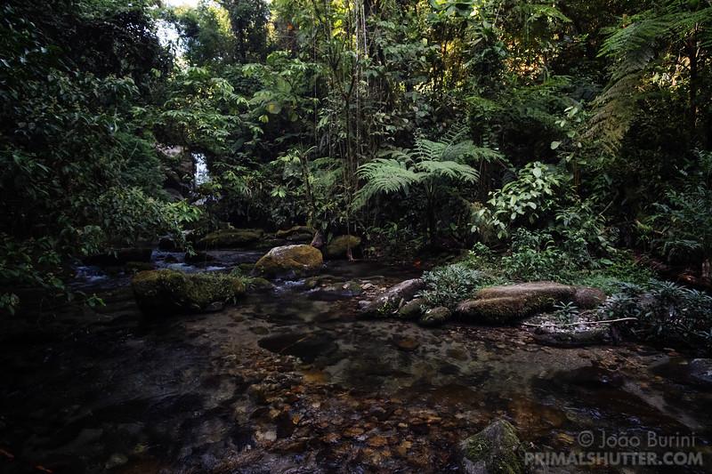 Creek in the Brazilian atlantic forest
