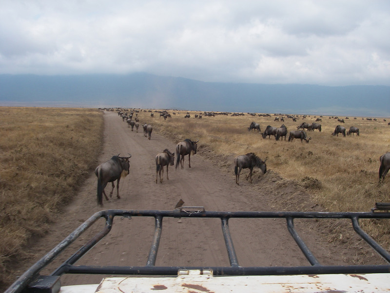 Ngorongoro crater conservation area - 7