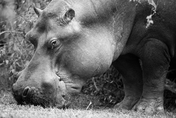 2014.08 Masai Mara
