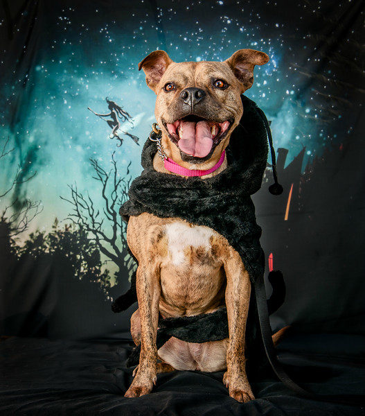 Pitties in the Park 2017 Halloween Photo Booooooth