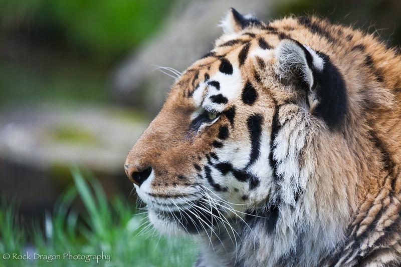 zoo_june4-11.jpg