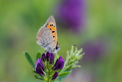 My Favourites - Butterflies