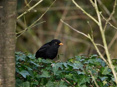 2011-02-20 Birds in the garden