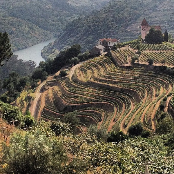 Wine terraces, Douro Valley days #tbupor #Portugal