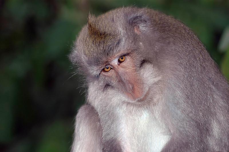 Bali Monkeys-1.jpg