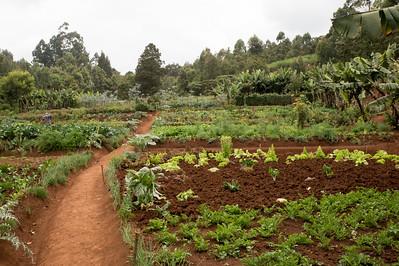 Mlango Farm - Ngecha
