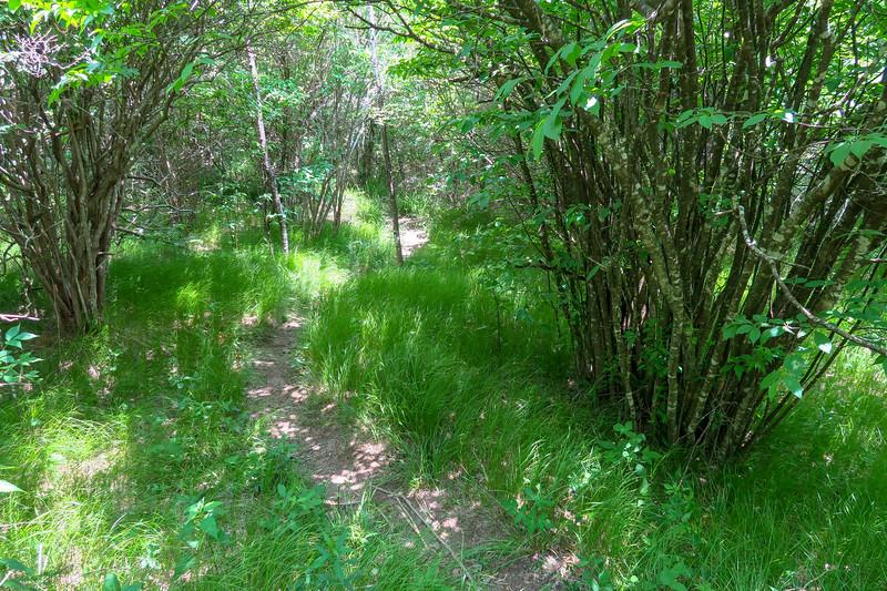 Greasy Cove Trail -- 5,500'