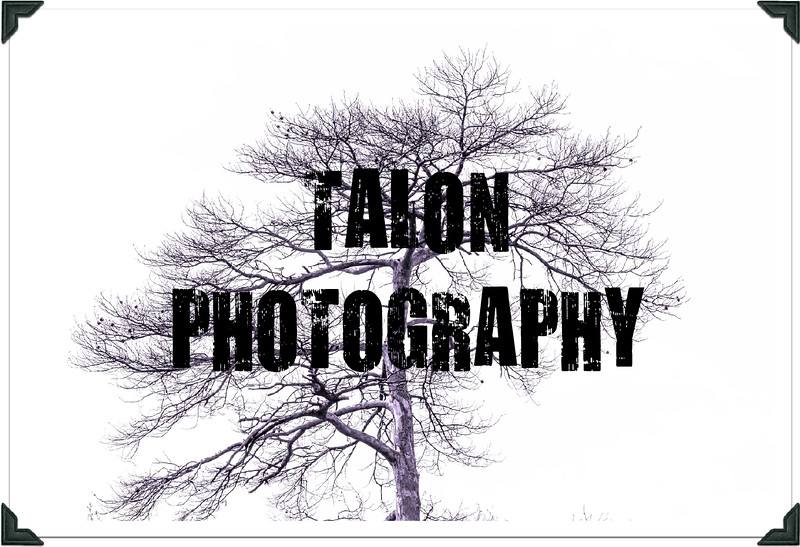 TP tree photo border.jpg