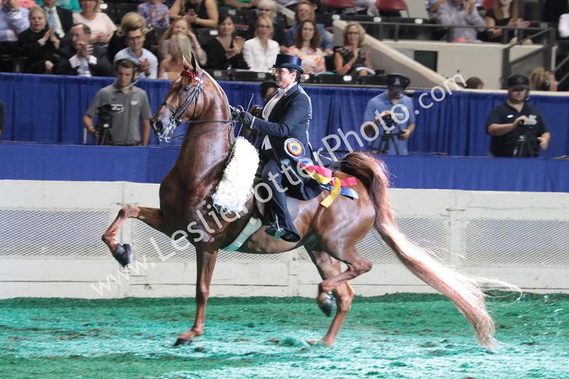 Saddlebred, Morgan, and Arabian Horse Shows