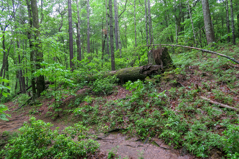 Lower Sidehill Trail -- 2,690'
