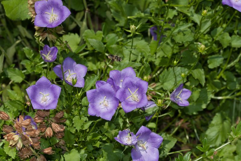2009 06 30_NY Botanical Gardens_0771.jpg