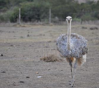 Skeiding Ostrich Farm