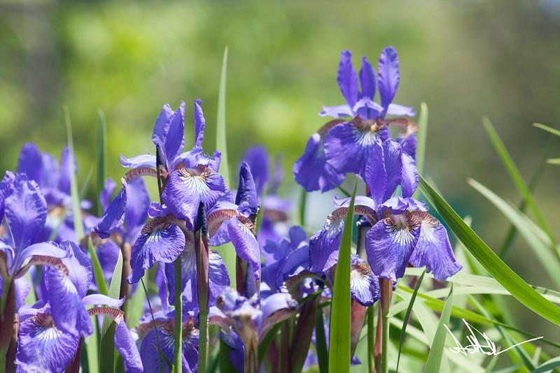 Flowers-2-3.jpg