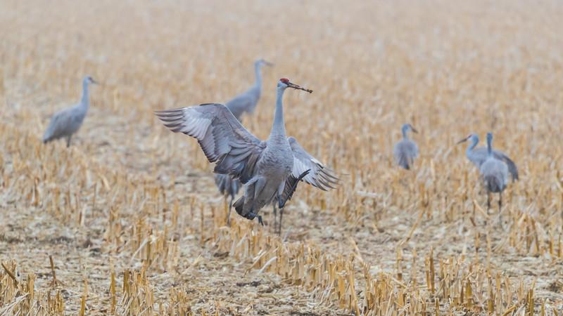 Crane18-2105.jpg
