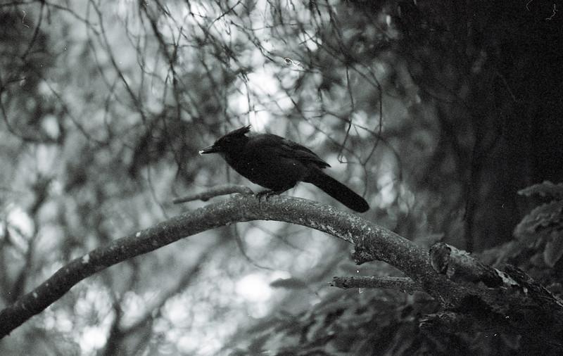 35_Kodak400BWCN_017.jpg