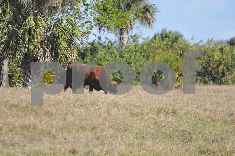 animals and landscape in FL 003.JPG
