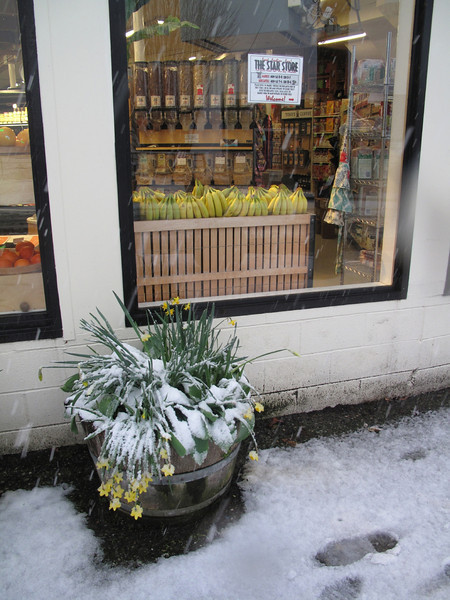 Tropical fruit,  Langley, Whidbey Island. March 22, 2013