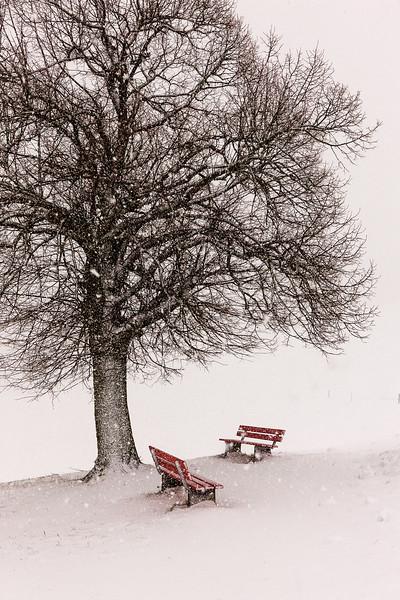 1120 Hoher Hirschberg 08.01.2012  1879.jpg