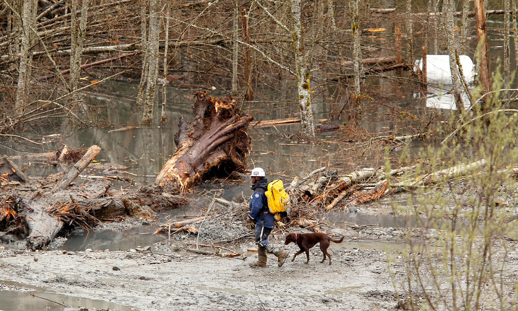 . A searcher and dog walk past debris and standing water at the scene of a deadly mudslide, Thursday, March 27, 2014, in Oso, Wash.  (AP Photo/The Herald, Mark Mulligan, Pool)