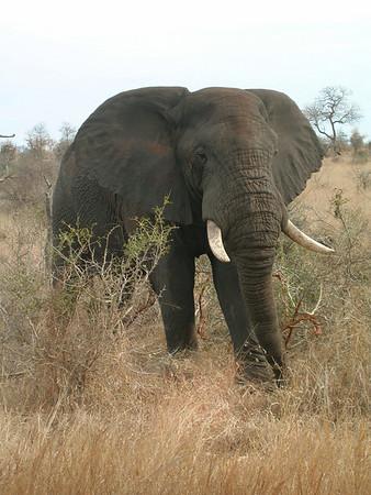 Southern Africa Safari 2006