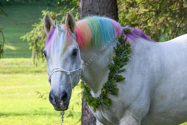 Schroeder the Unicorn 071520