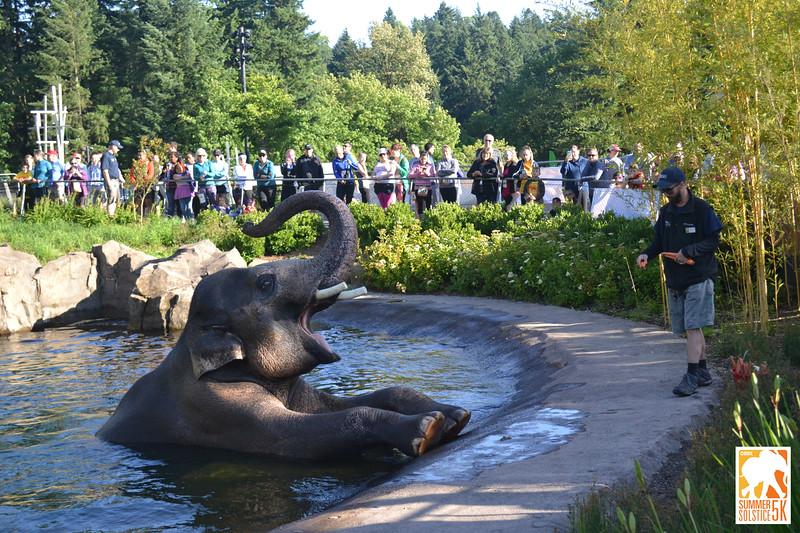 Anzelina-Coodey_Solstice-Run-Oregon-Zoo_021.jpg