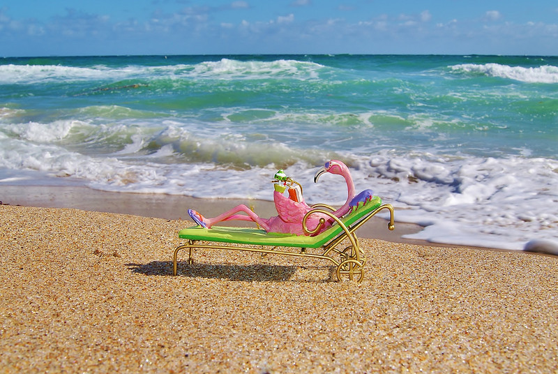 Beach Flamingo 1.JPG