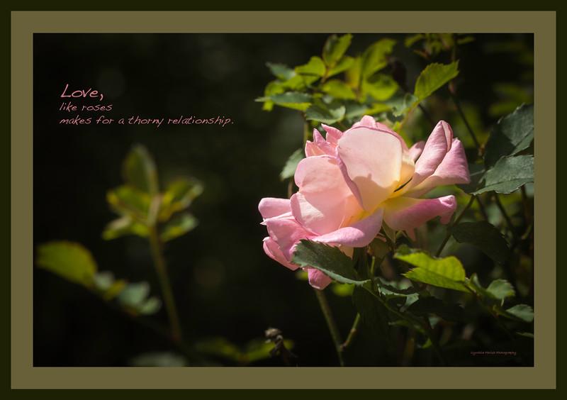 rose_Love like roses_664A6903.jpg