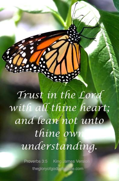 Proverbs 3-5  d  .JPG