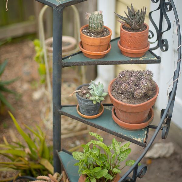 htx-cactus-space007.jpg