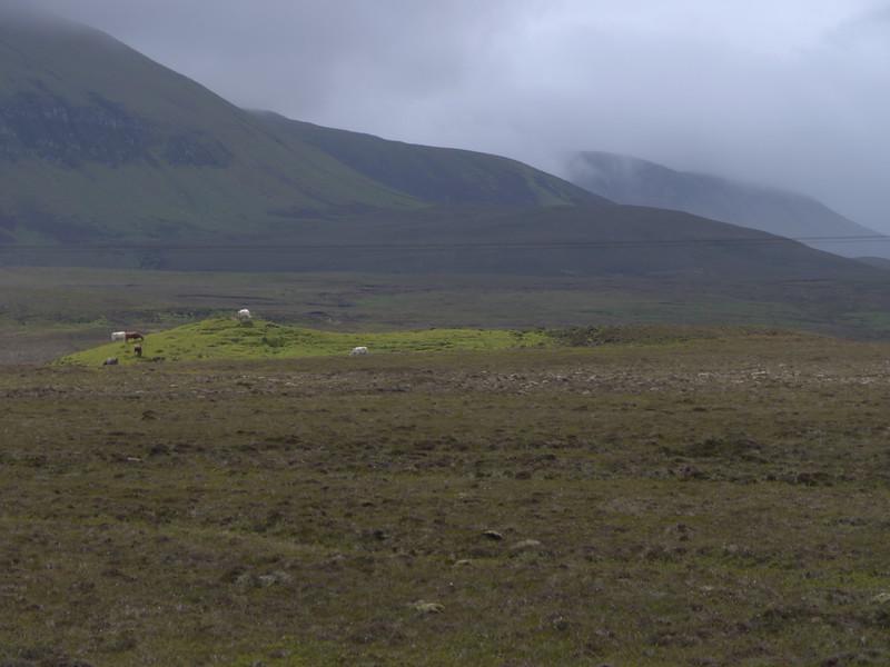 @RobAng Juni 2015 / Kilmaluag, Isle of Skye / Eilean a'Cheo Ward  (Inner Hebridies), Scotland, GBR, Grossbritanien / Great Britain, 70 m ü/M, 2015/06/20 13:27:09