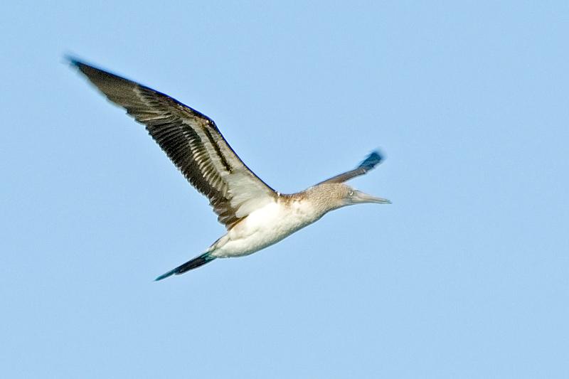 flyingboobie056.jpg