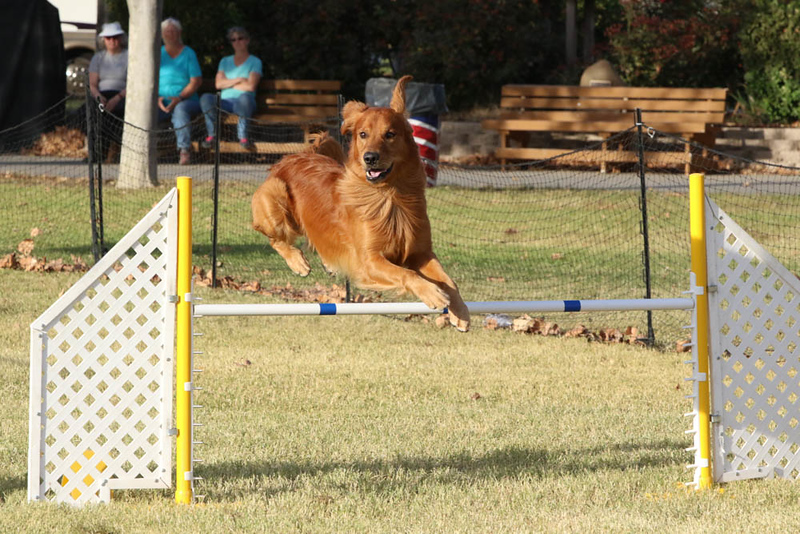 11-4-2018 Border Terrier-2489.jpg