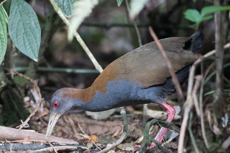 19-Sept Brazil Birds-8566.JPG