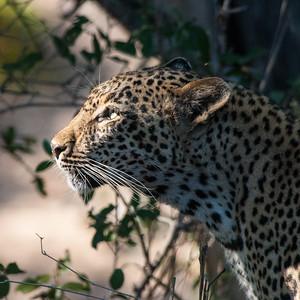 South Africa Safari 2016