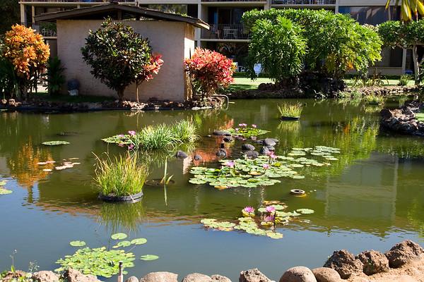 2009 Maui