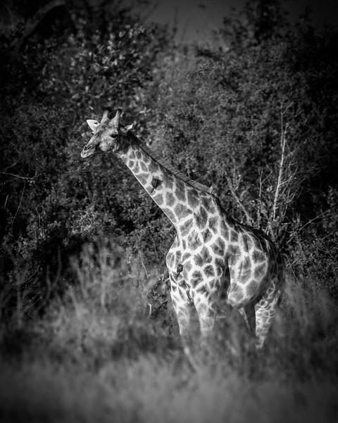 Botswana_June_2017 (4896 of 6179).jpg