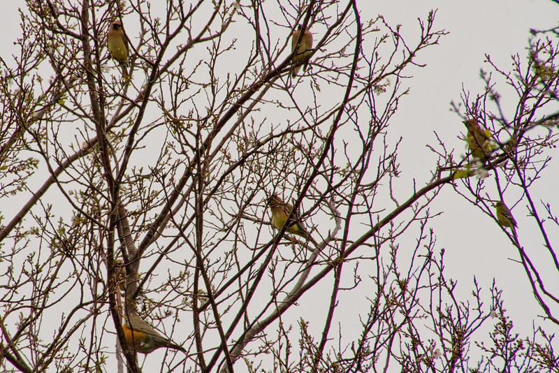 Backyard_Birds-04.jpg