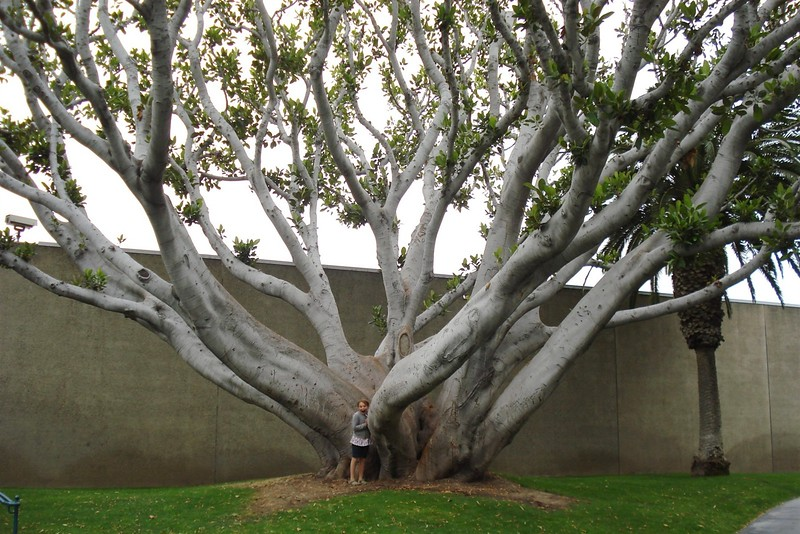 Breanna with Cool Tree.jpg