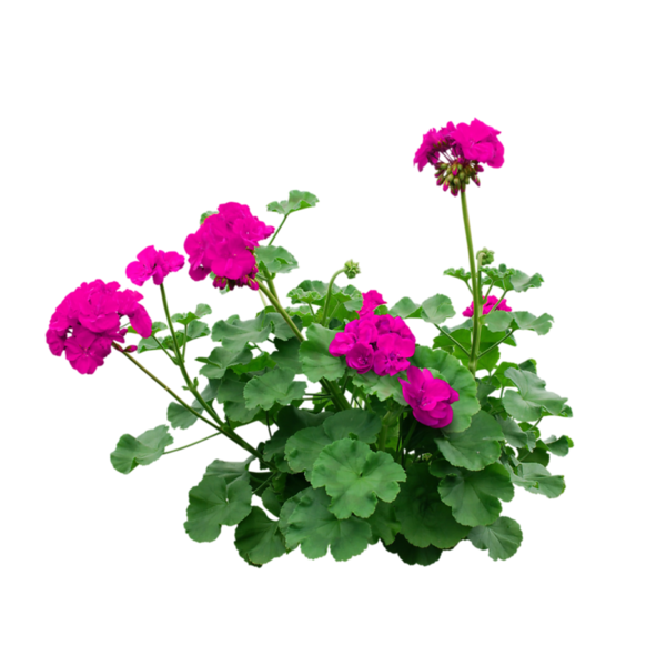 Flower overlay