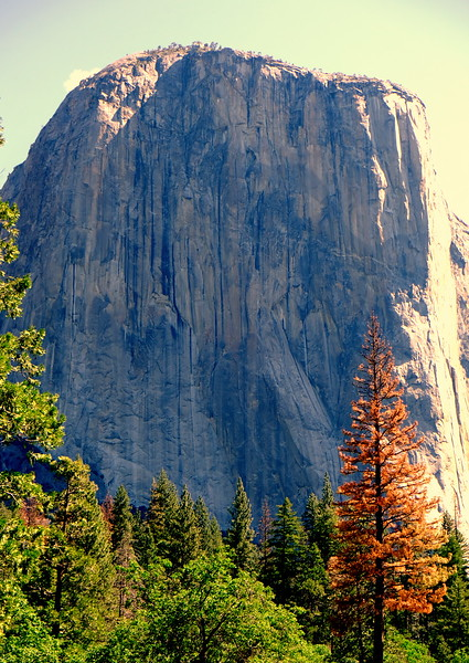 California Day 7 Yosemite 06-01-2017 60.JPG