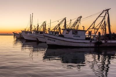 Rockport, Texas:   Great Blue Heron Rookery, Rockport Harbor Shrimp Boats, The Big Tree