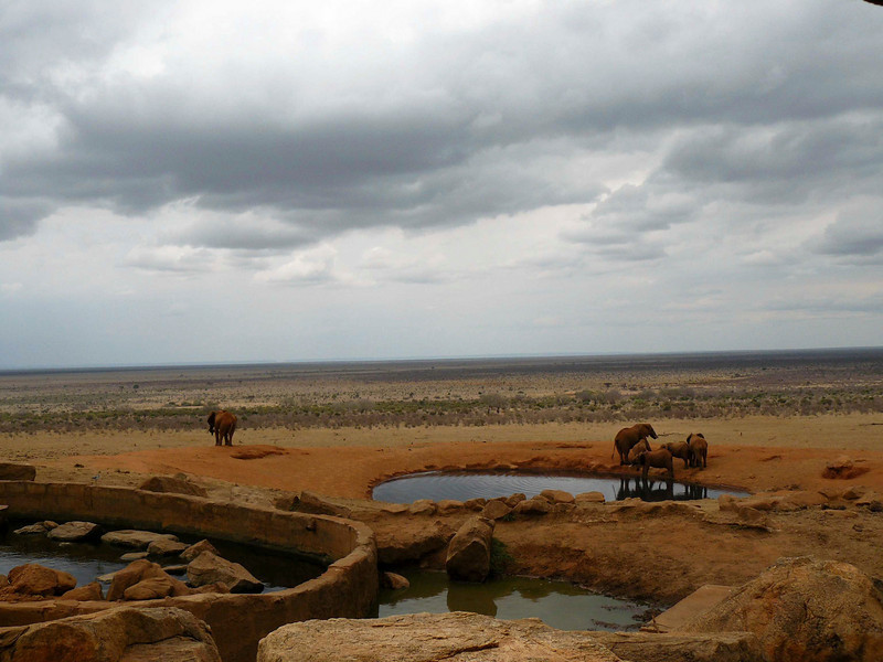 Elephants Watering Hole Tsavo East 3.jpg