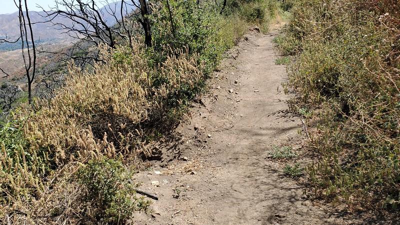 20190810021-Los Pinetos trailwork.jpg