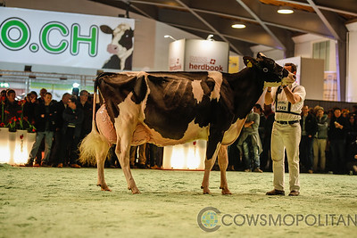 Swiss Expo Holstein Senior Cows 2018